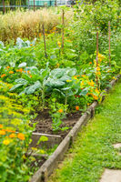 Sideview to kitchen garden with vegetables