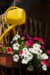 Colorful flower plant and watering can hanging on bamboo fence