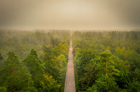 Straight through a misty forest - drone view at the morning over a street in bavaria, germany.