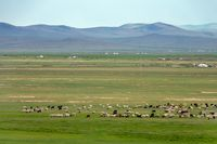Mongolia landscape with yurts and herds