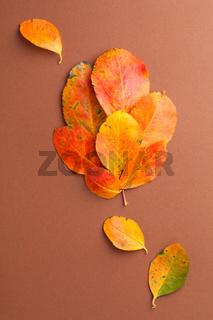 Fresh Orange Leaves Formed In Leaf Shape