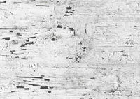 Cracked white paint on wood