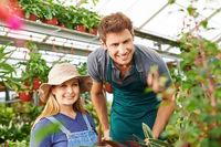 Zwei Gärtner arbeiten im Gewächshaus