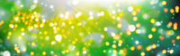 lights in nature motif, beautiful bokeh background