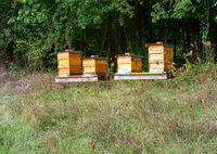 Beekeeping with wooden beeyards