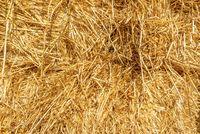 Bright hay background