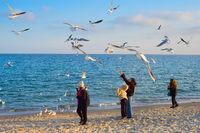 People feeding birds sea Odesaa