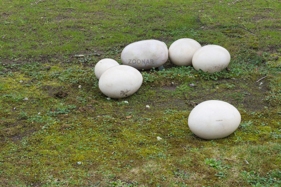 Fossil stone eggs of a dinosaur