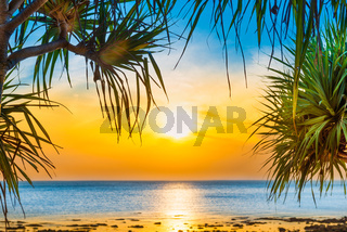 Sunset sea and beach with coconut palm tree