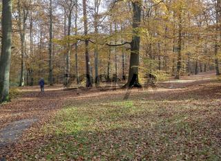 Herbstwald, Leipnitzsee, Wandlitz, Brandenburg