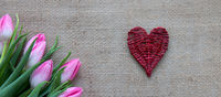 Pink tulips and red heart isolated on a cloth background.