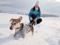 Walk in the snow with the small dog