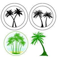 Palme, Kokospalme, Königspalme, Palmenblätter, Freisteller – Neutraler Hintergrund, Ferien, Urlaub,