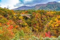 Beautiful autumn color of foliage at Naruko Gorge
