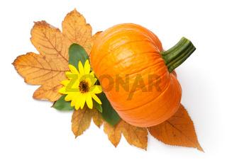 Fresh Orange Pumpkin And Sunflower