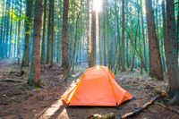 Orange tent in green forest