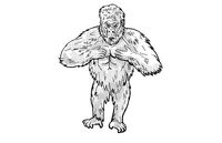 Silverback Gorilla Thumping Chest Cartoon