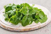 Fresh organic arugula leaves on white cutting board. Preparing salad.