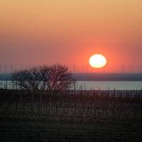 Sunrise at lake neusiedlersee in Burgenland