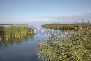 Insel Usedom - Schilfguertel am Peenestrom