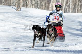 Kamchatka Kids Sled Dog Race Dyulin (Beringia)