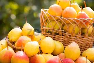Basket full of yellow juicy pears