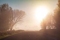Fog in the fields