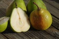 Pyrus communis Alexander Lucas, Pear