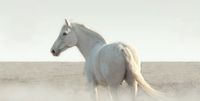White horse in the fog stands and looks around