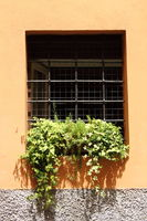 Window with plants