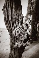 Wooden breakwater detail in Saint-Malo, brittany, France