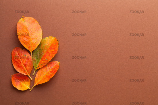 Autumn Minimal Composition With Fresh Orange Leaves