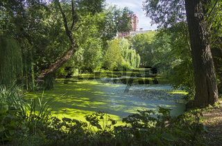 An old overgrown pond in the park