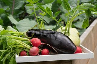Harvest season, vegetable