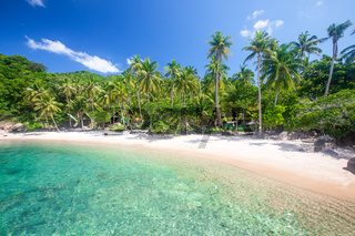 tropical beach with coconut palm tree