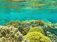 Coral world under the water level