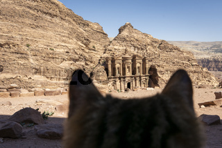 Stray cat looking at the Monastery in Petra, Wadi Musa, Jordan