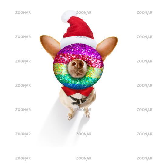 christmas santa claus dog and xmas balls or baubles hanging