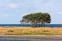 Baumgruppe auf dem Naturschutzgebiet Oehe-Schleimünde zwischen Schlei und Ostsee