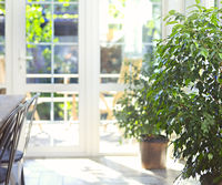 Green plant in dining room with terrace exit