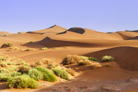 Sand dunes with grass in the Sahara, Morocco, Africa.
