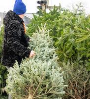 Man dumps a Christmas fir tree after Christmas