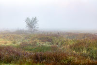 Bush in the mist on a meadow near Schrobenhausen, Bavaria, Germany