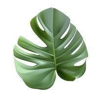 Green leaf monstera plant vector realistic illustration