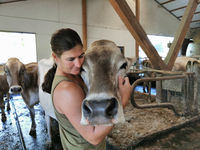 woman with cow in the stable