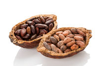 Cocoa beans in a pod isolated on white background.