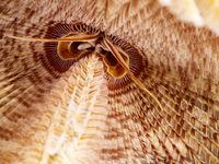 Fan worm