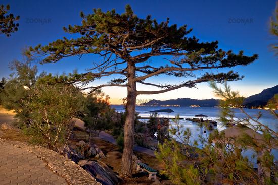 Makarska beach and pine tree sunset view