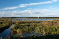 Naturlandschaft auf Fischland