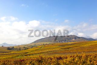 Blick über die Weinberge bei Godramstein